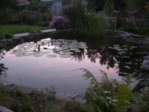 Фото прудов в Краснодарском крае