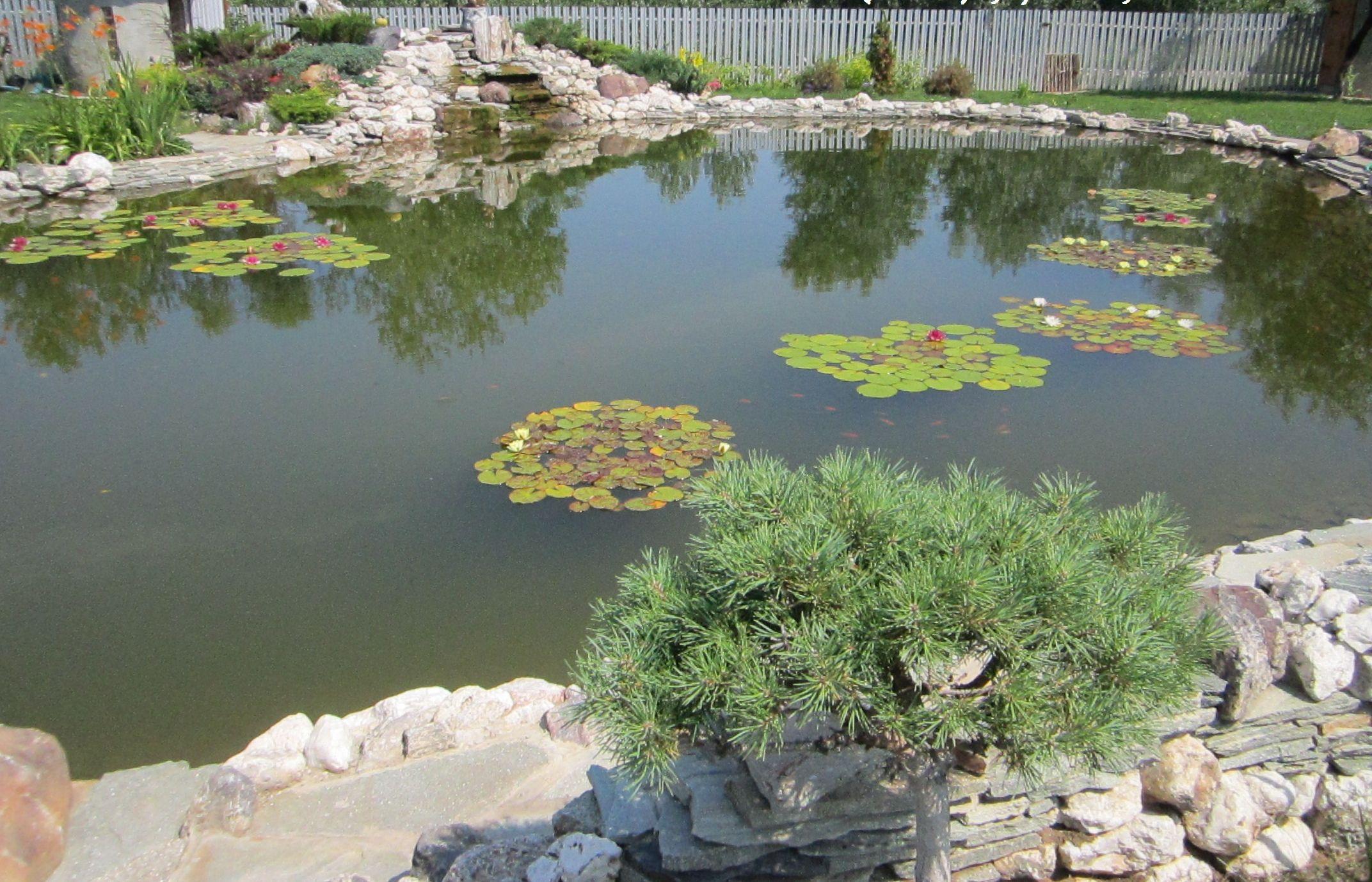 Искусственный биопруд для рыб и купания