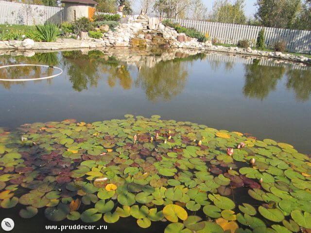 Плавательный биопруд. Искусственный водоём в Краснодаре, Сочи, Анапе