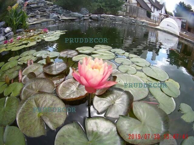 Фото прудов. Декоративные пруды