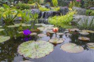 Растения для искусственного водоёма